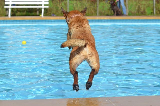 skok psa do bazénu.jpg