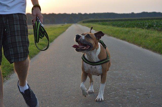 aktivní procházka